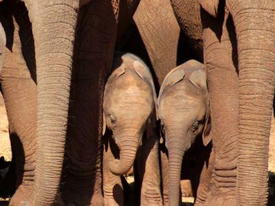 Elephant in Addo Park - alan Tours