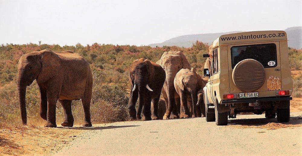 4 x 4 Alan Tours landcruiser Addo safaris
