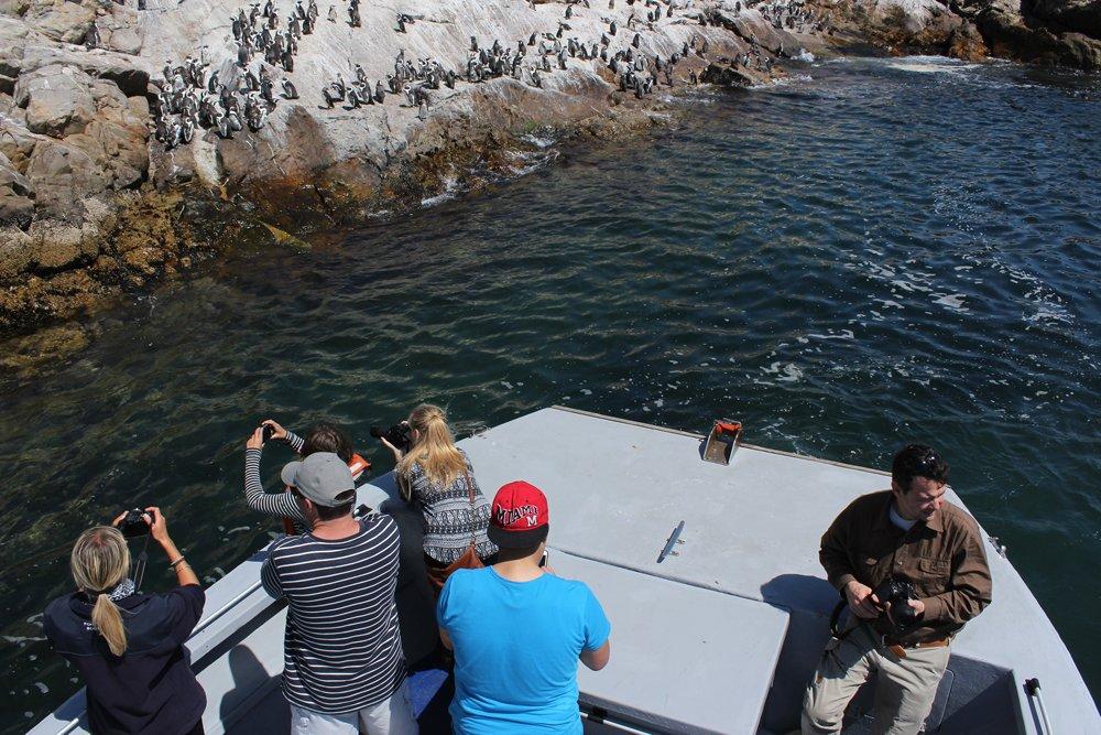 Penguins on St Croix Island, Alan Tours