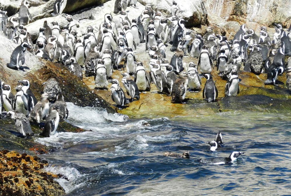 Penguins, Marine Tour, Alan Tours