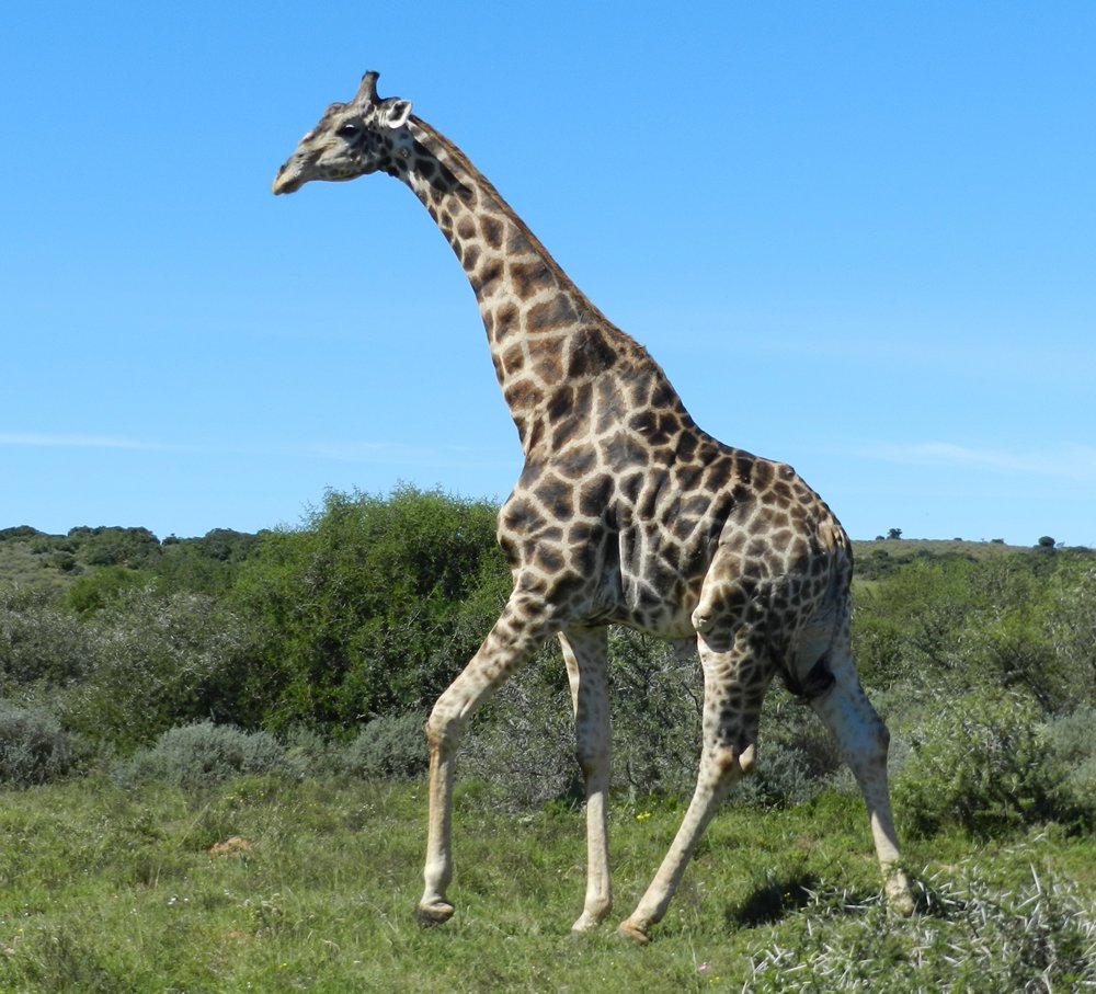 On tour in South Africa with Alan Tours in the Kragga Kamma game reserve
