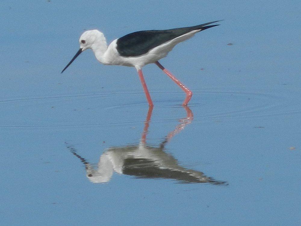 Birdwatching South Africa