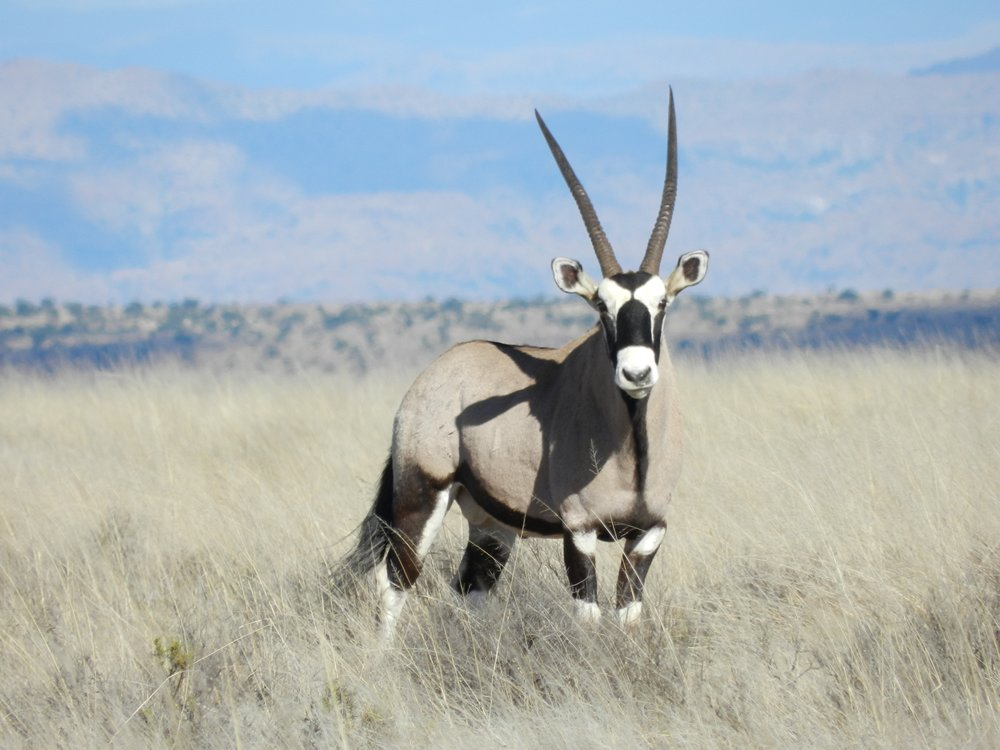 Oryx, South African safaris with Alan Tours