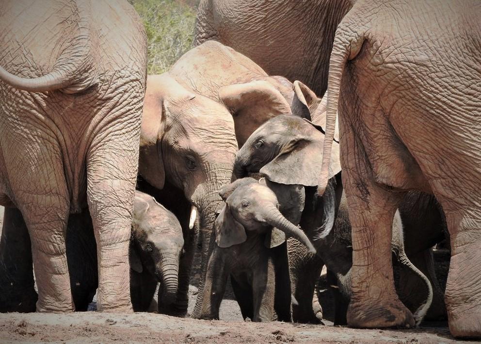 Addo Elephant National Park, Tours South Africa