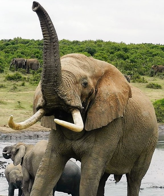 Addo Park tours, south africa,