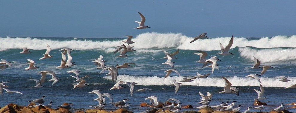 Birdwatching with Alan Tours, South Africa