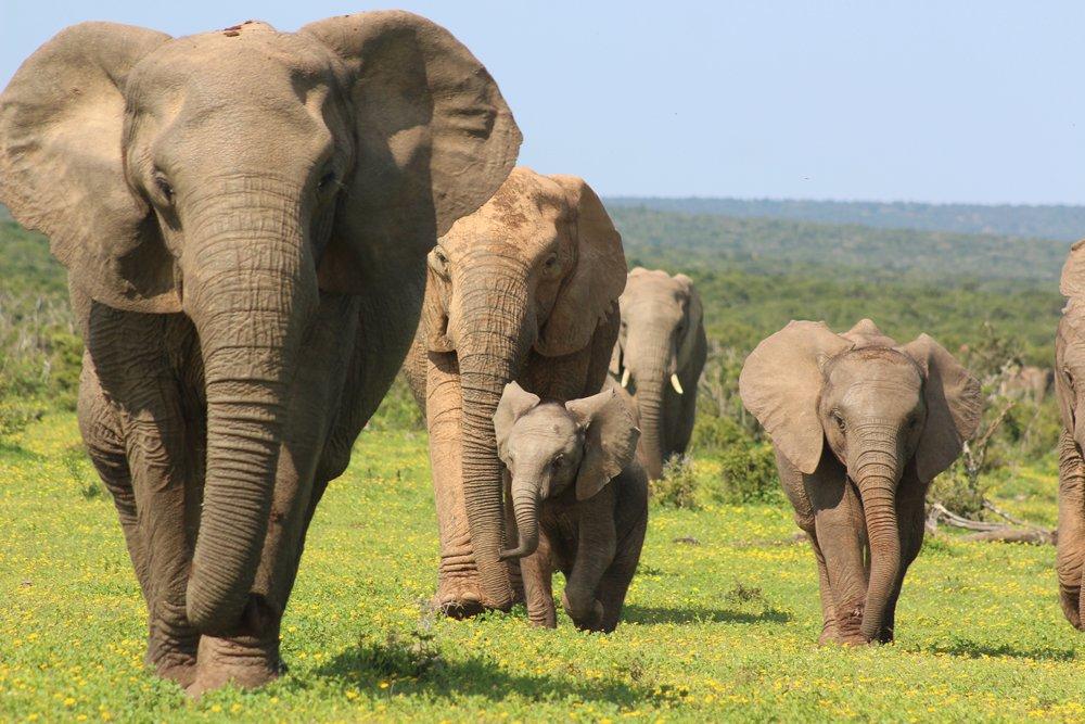 Addo safaris mit Alan Tours in Suedafrika