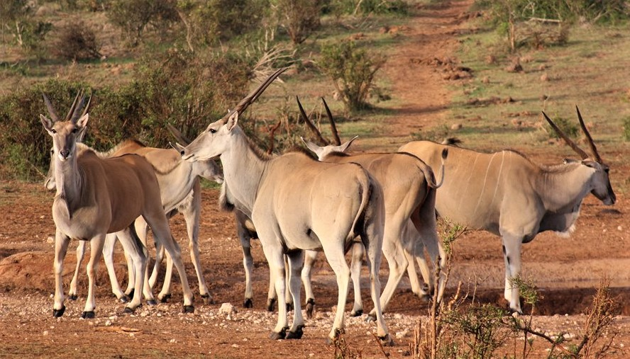 Addo National Park safaris with Alan Tours