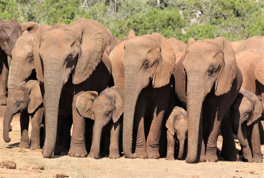 Addo Park, Tours South Africa with Alan Tours