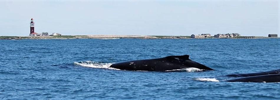 Whale watching Port Elizabeth