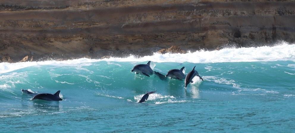 Bottlenose Dolpohins off Woody Cape Dune Fields