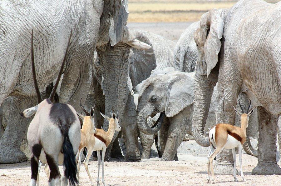 Etosha National Park with Alan Tours, Port Elizabeth