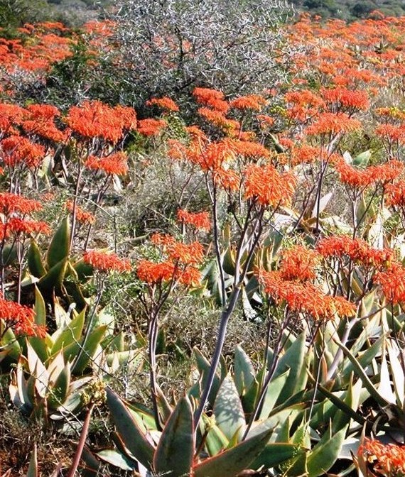 Tours South Africa with Alan Tours