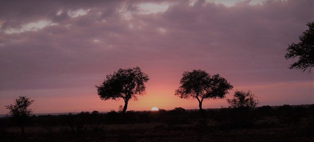 Kruger Natinal Park Tours South Africa