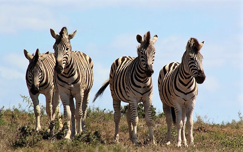 Addo tours South Africa