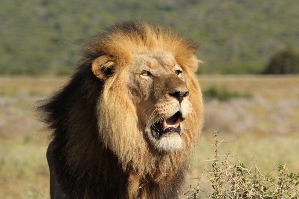 Addo Safaris South Africa