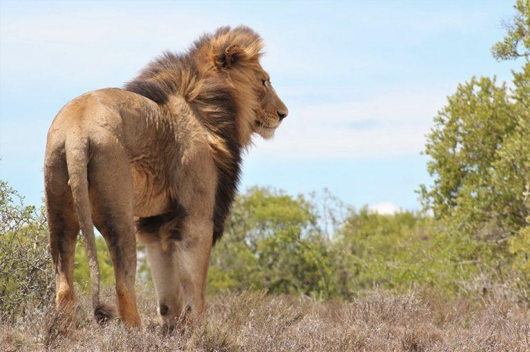 addo safaris with Alan Tours