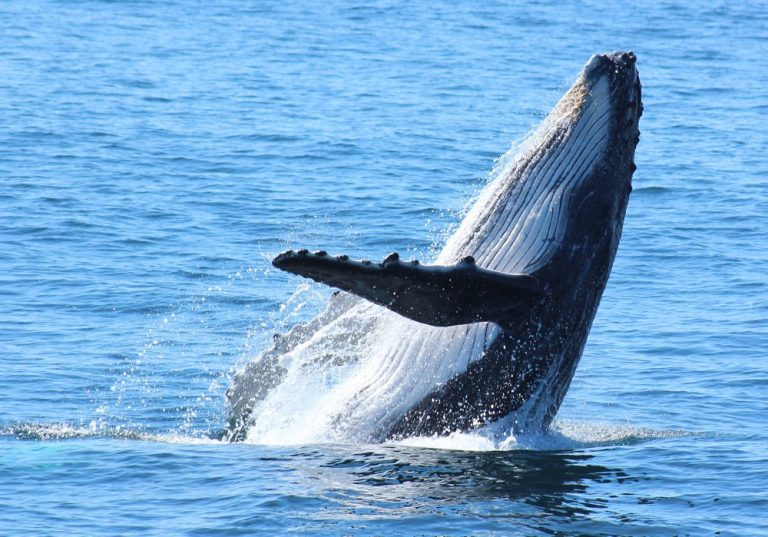 Whale watching Alan Tours