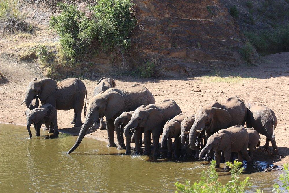 elephants kruger national park