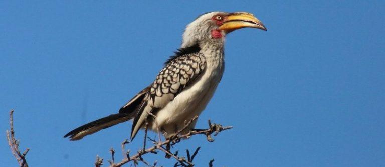 hornbill, kruger park, alan tours