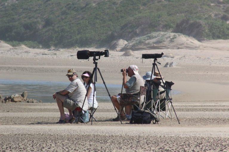 Birdwatching Port Elizabeth tours
