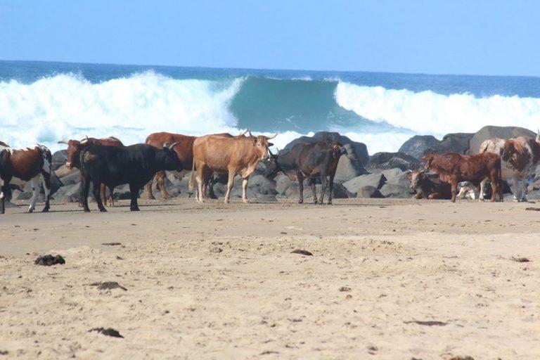 wild coast tours