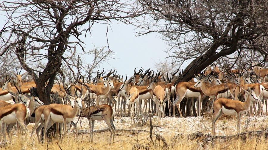 Etosha with Alan tours, south africa
