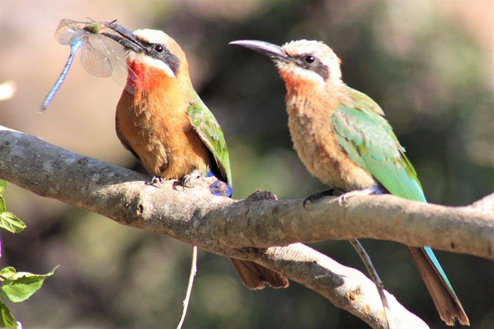 kruger park bird watching with alan tours