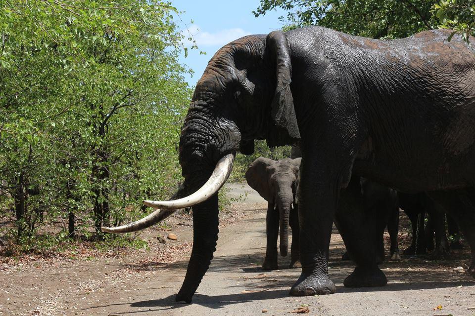 Kruger national Park tours with alan tours