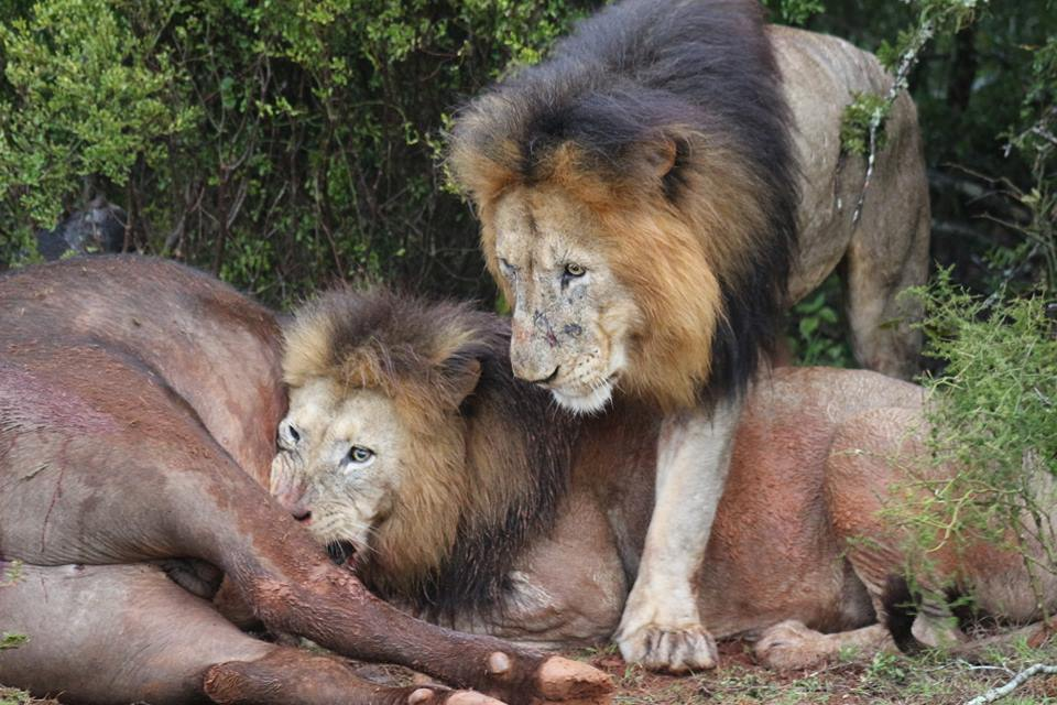 Lon kill in the Addo Park with Alan Tours South Africa