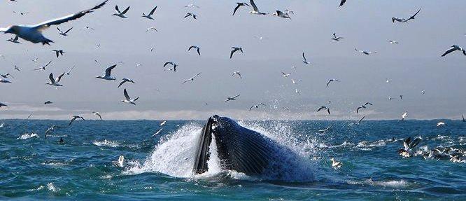 Sardine run Algoa Bay Port Elizabeth