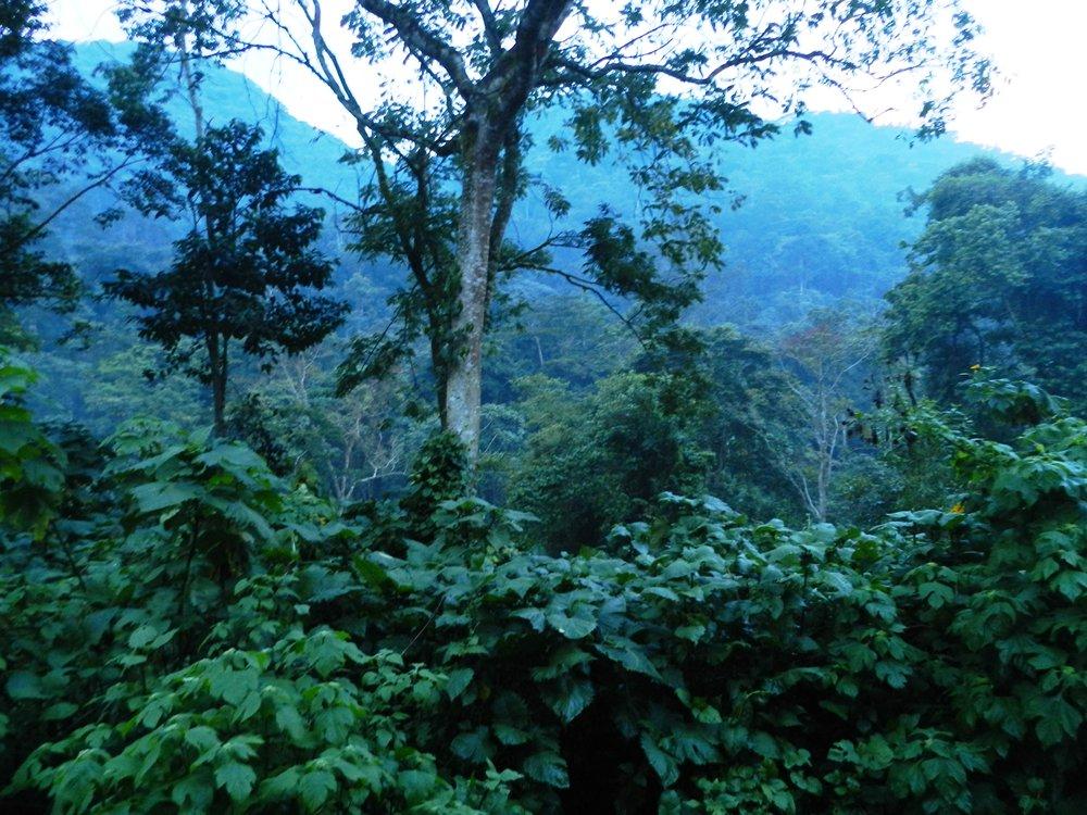 gorilla trekking uganda with alan tours south africa