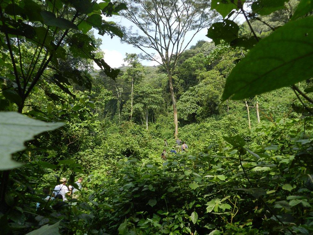 Uganda mountain gorilla trekking