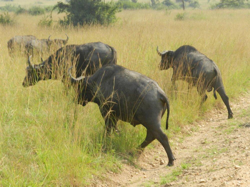 Uganda expedition with Alan Tours