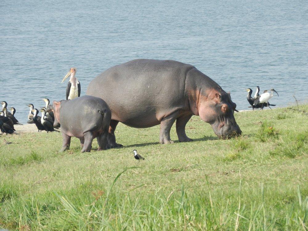 murchison falls, uganda, alan tours south africa