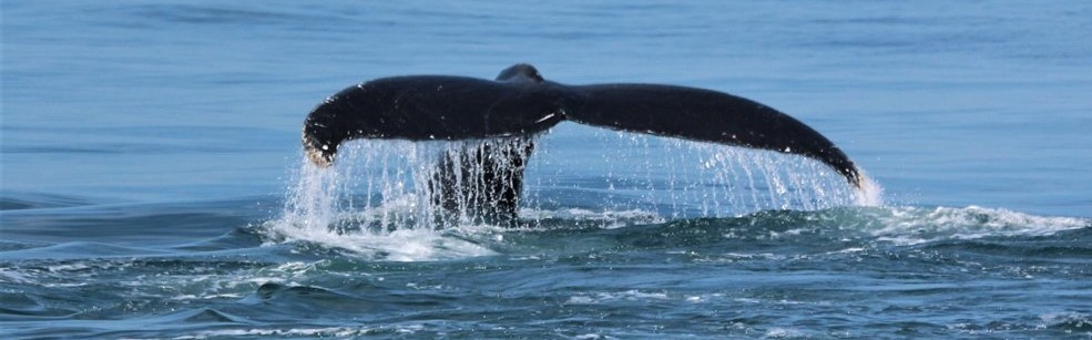 Whale watching port elizabeth with alan tours