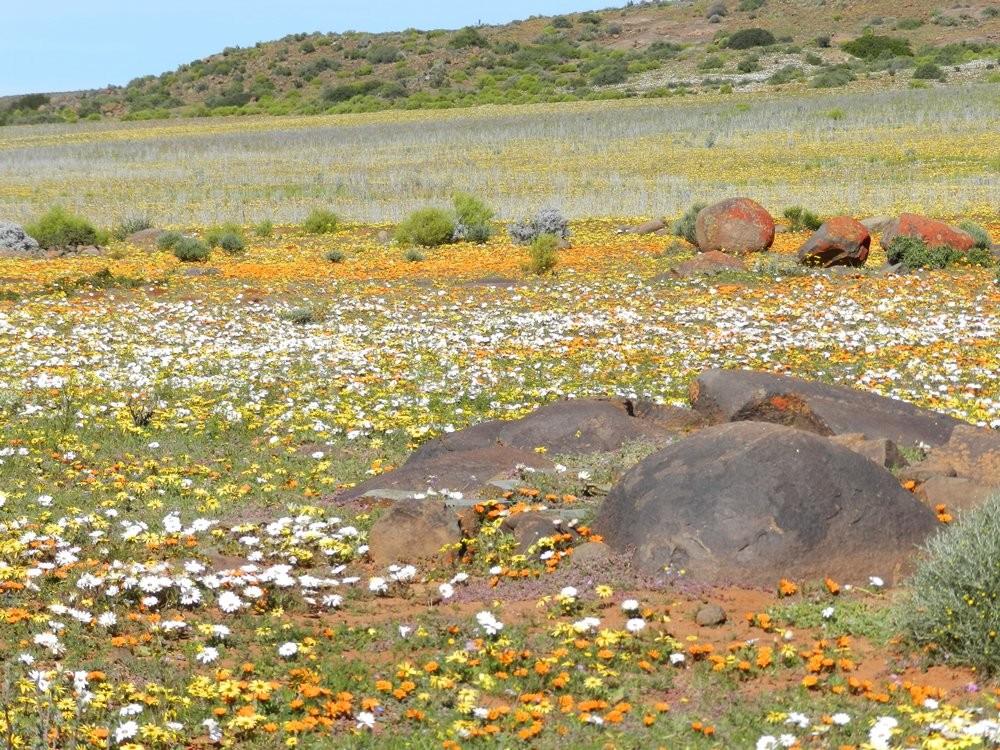 Namaqualand – Spring Flower Tour
