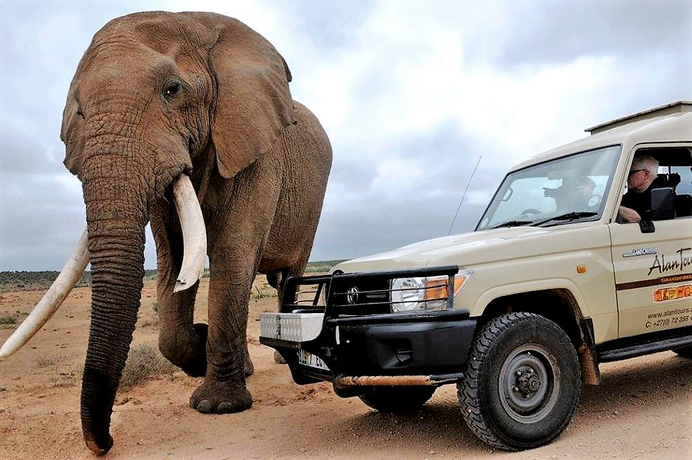 Addo Elephant national park safaris from port elizabeth