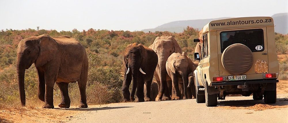 Addo Elephant National Park Shore Excursion