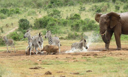 Addo Park Safaris, Alan Tours