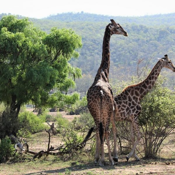 Kruger National Park Tours South Africa with Alan Tours