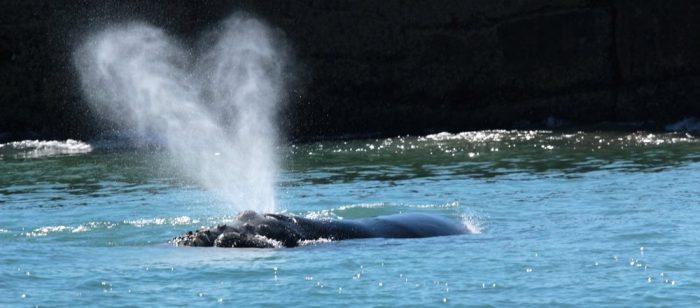 Whale watching Alan Tours, Port Elizabeth