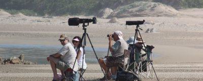 Birding at Cape Recife