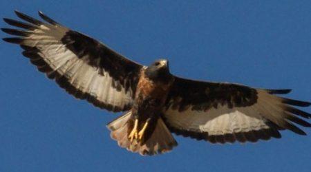 Birdwatching Port Elizabeth, South Africa