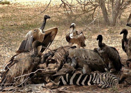 Kruger National Park Tours South Africa with Alan Tours, Port Elizabeth