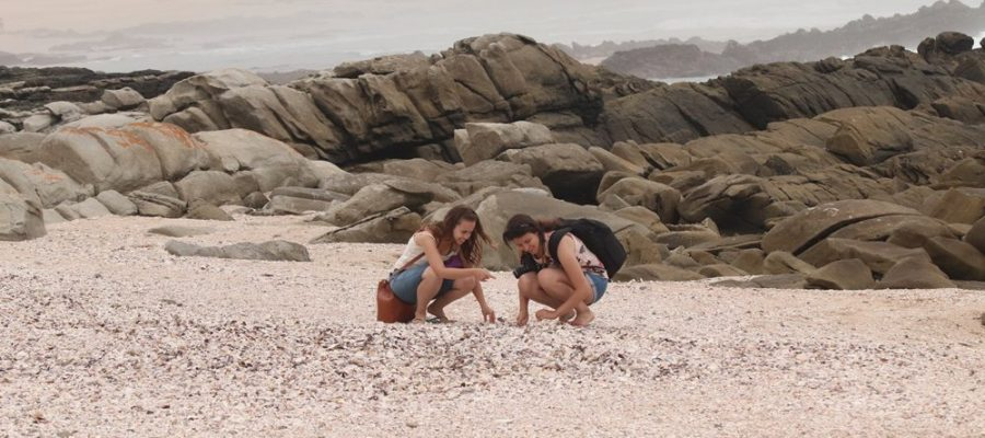 Picking sea shells off the sea shore in Port Elizabeth, South Africa